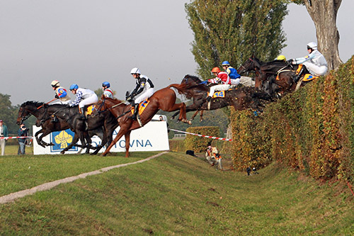 Horses in race jumping over hurdle