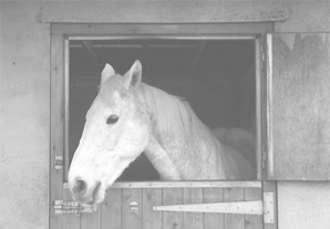 horse-stable-grey